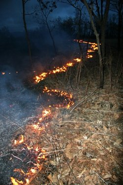 Ground fires are probably the greatest threat to leopard habitat.Up to 20% of SW Primorsky Krai burns annually.